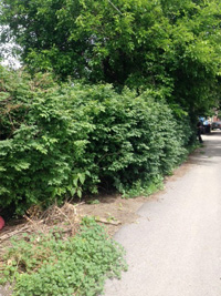 Blitz 2014 bush